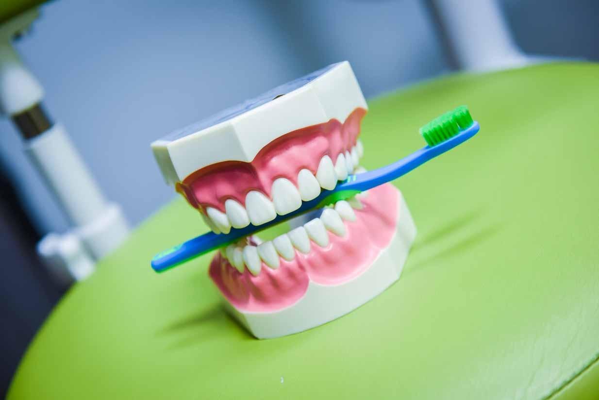 Tooth Model | Grace Family Dental | Airdrie Dentist